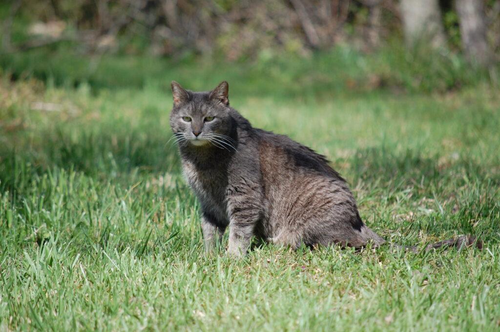 a particular cat